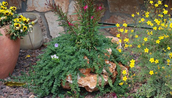 Planting in rocks