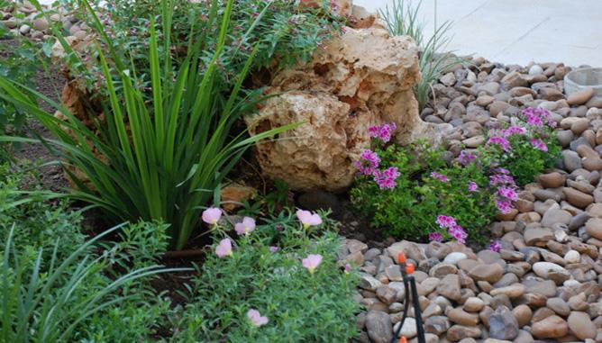 Rocks as backdrop to plants