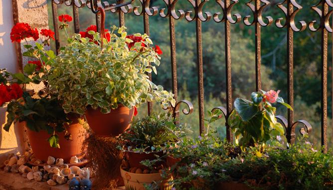 גינון פשוט, מינימאלי וקסום במרפסת קטנה