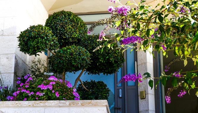 צמחים מעוצבים בשילוב פרחים