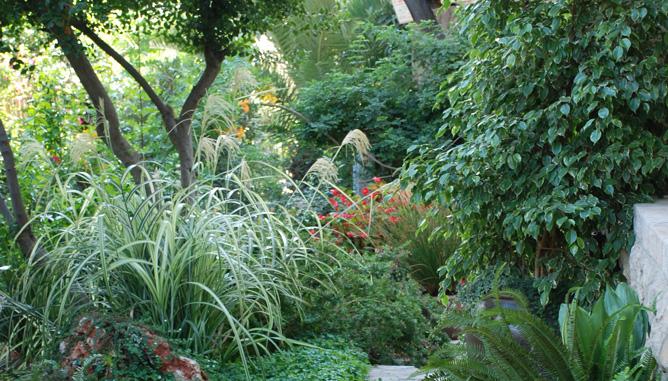 מגוון צמחייה ליצירת סגנון  טבעי