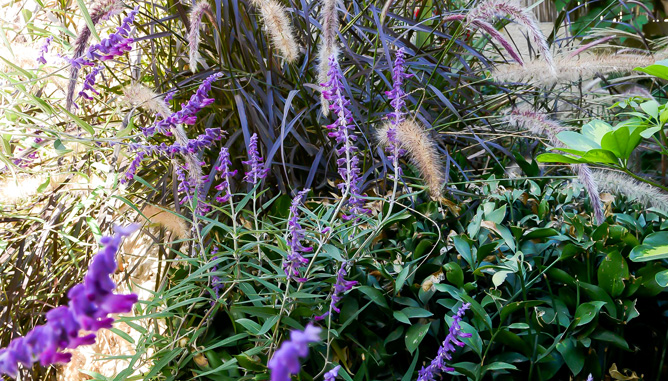 צמחים בסגנון טבעי