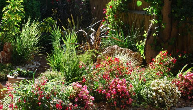 שילוב צמחיה טבעית וסלעים
