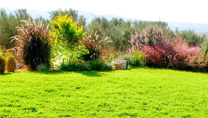 צמחיה טבעית בשולי המדשאה