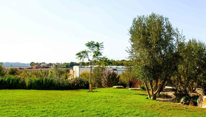 עצי זית ושיחי תבלין מסביב למדשאה